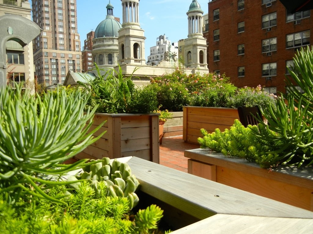 Victory Gardens NYC - Urban Rooftop Garden by Dr. Robert Graham and Julie Graham FRESH Med NYC   www.freshmednyc.com/