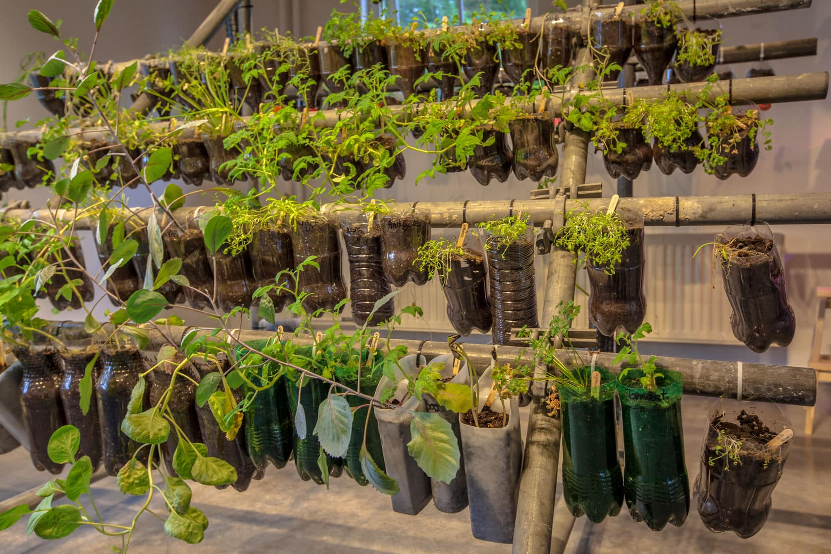 Indoor Sustainable Garden Made of Recyclable Materials - Indoor Herb and Vegetable Garden Made of Plastic Bottles   https://physiologicnyc.com/integrative-medicine-wellness/