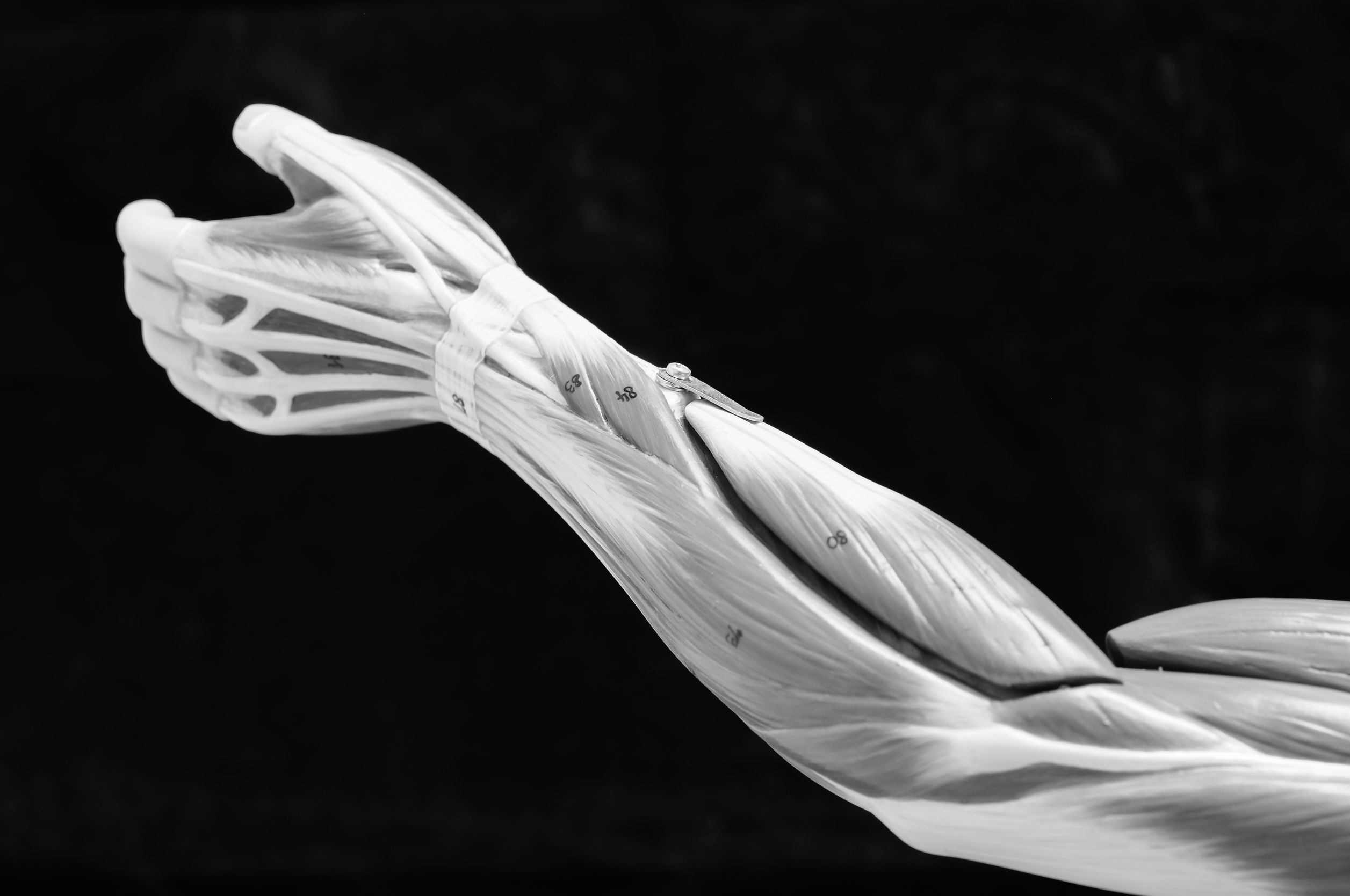 Anatomy of Upper Extremity - Lingering Pain After A Fall Or Sports Impact Upper Extremity Injury | https://physiologicnyc.com/physical-therapy/