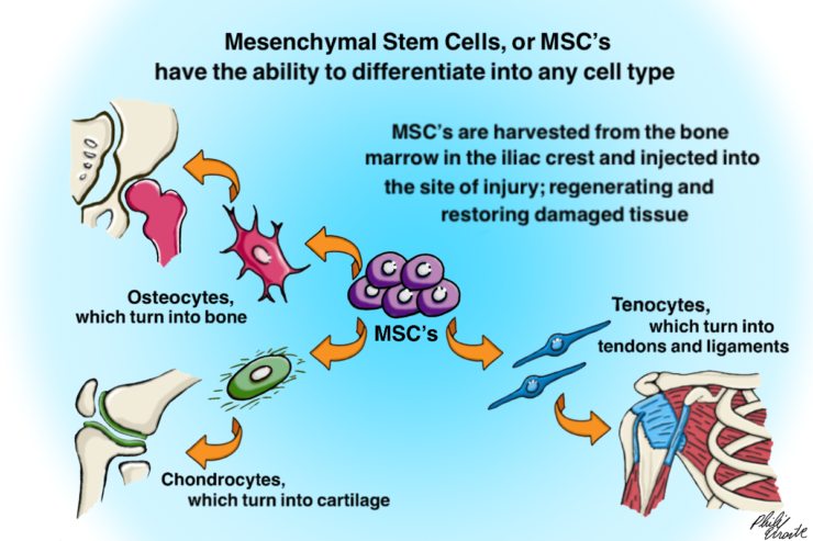 What Is Stem Cell Therapy - Stem Cell Therapy to Regenerate Damaged Muscle, Bone, and Cartilage Tissue | https://physiologicnyc.com/regenerative-medicine/